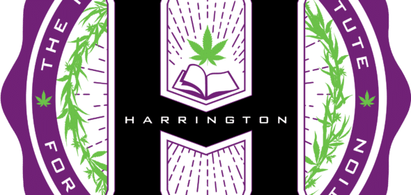 Viola cannabis company starts cannabis education institute