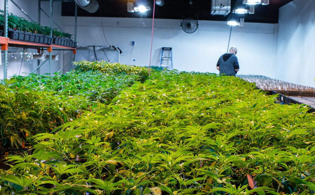 Massachusetts recreational cannabis now a $2 billion industry