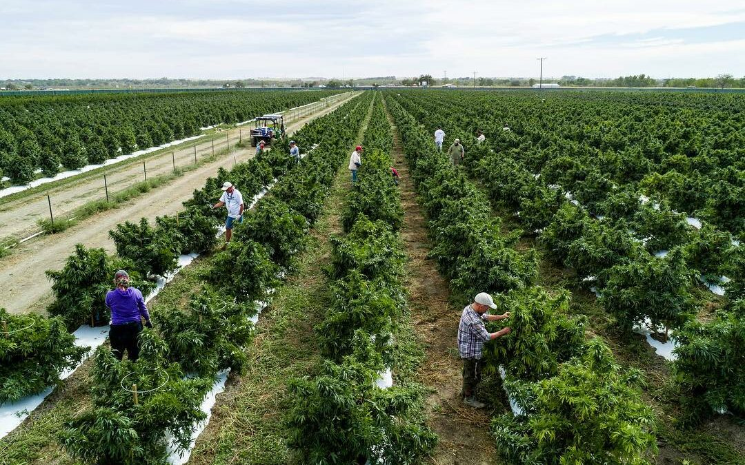 Colorado's Largest Cannabis Farm Bought by Massachusetts Company