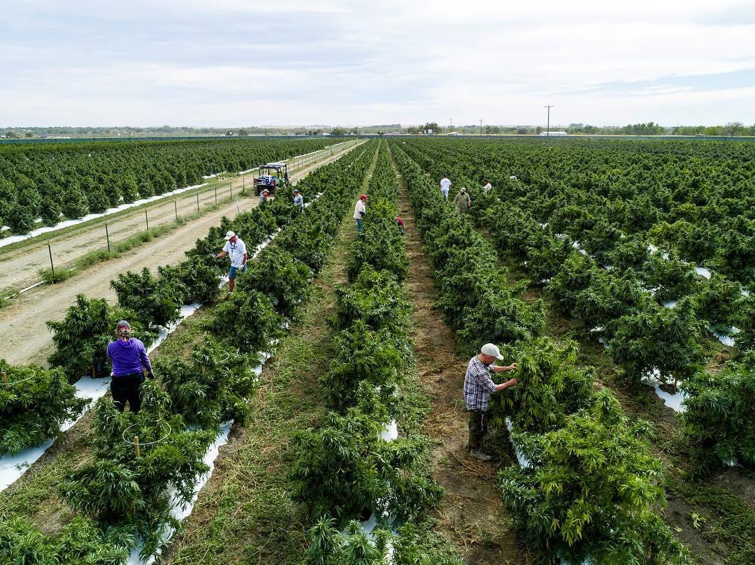 colorado cannabis farm purchased by Massachusetts company
