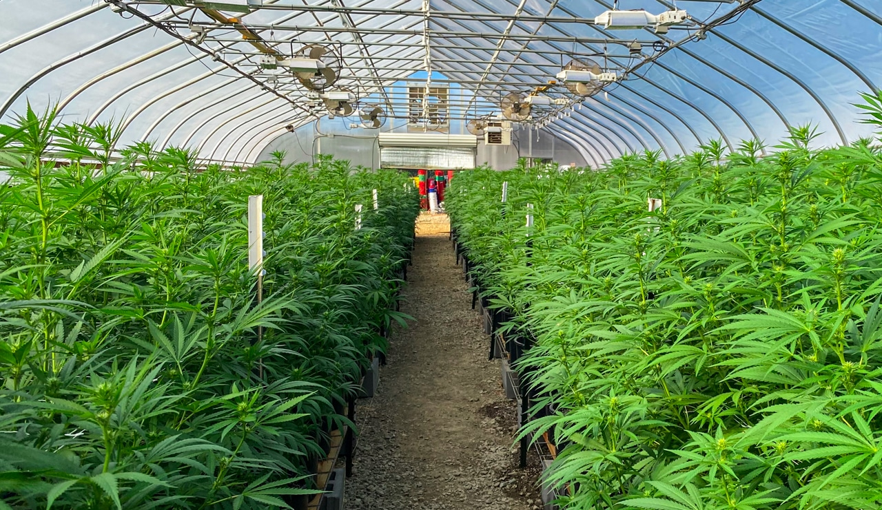 virginia cannabis legalization could be flipped in 2022